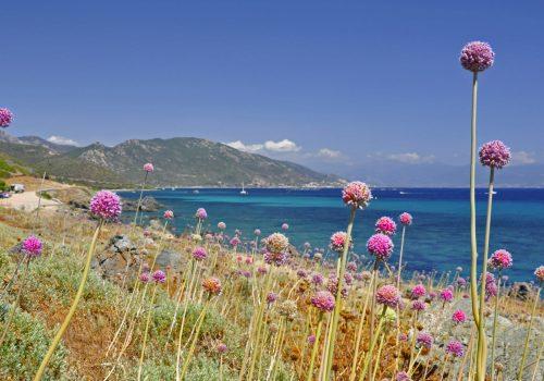 Corsica Ajaccio Bay